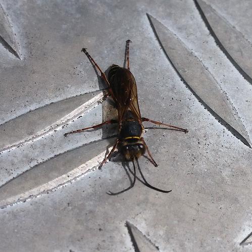 Welches Insekt ist das IMG_20200709_121204