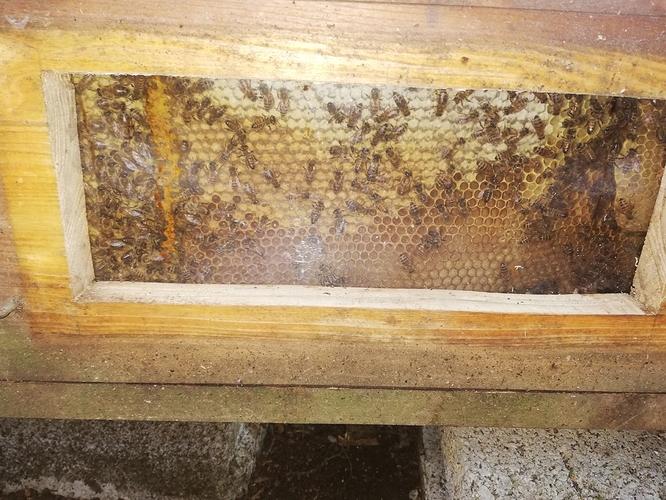 Verdeckelte Honig 20.05.2020 Kiste 1