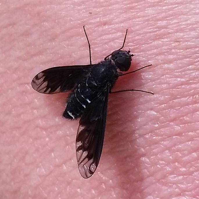 Welches Insekt ist das - Detail IMG_20200523_155920